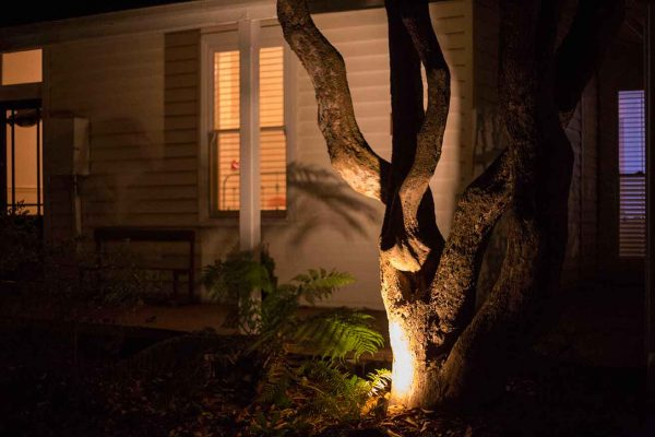 Garden lighting Installation: tree lit up using copper spike garden uplights