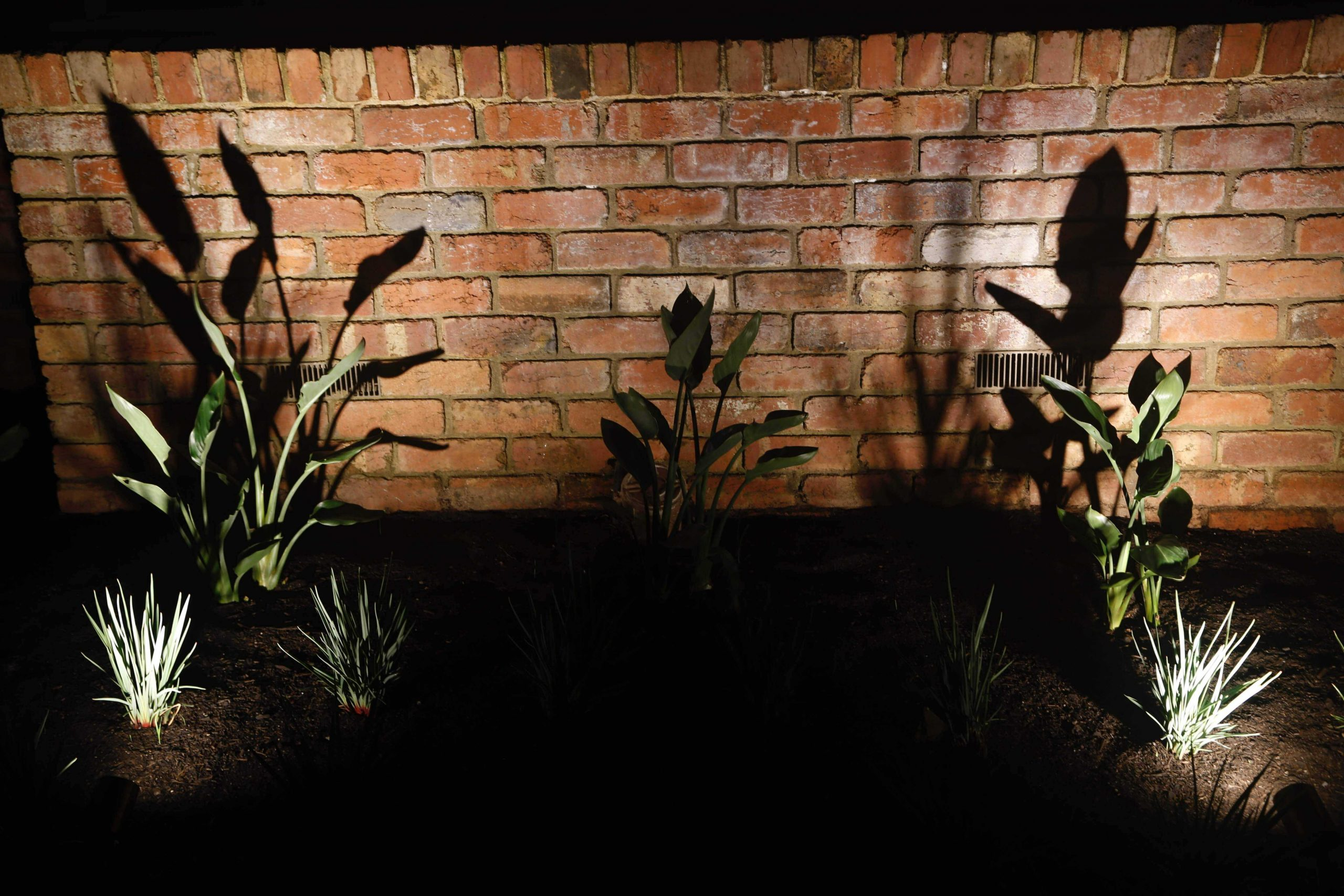 Camberwell electrician installed outdoor garden lighting that can be controlled from your phone